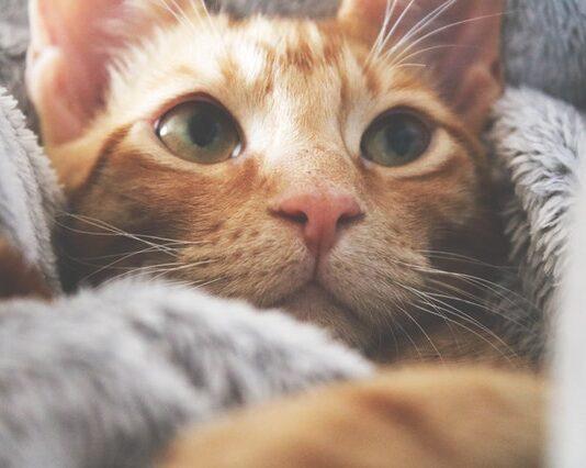 Jedzenie uzupełniające dla kotów